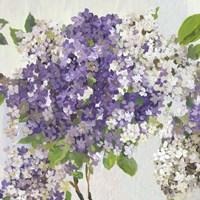 Summer Hydrangea II Fine Art Print