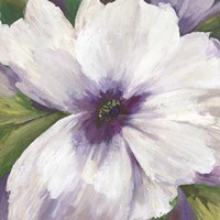 Violet Orchid II Fine Art Print