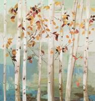 Fall Birch Trees Fine Art Print