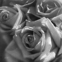 Rose Pedals B&W Fine Art Print