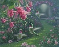 Hummingbird Haven Fine Art Print