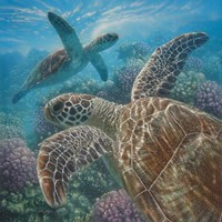 Sea Turtles - Turtle Bay - Square Fine Art Print