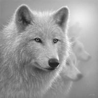 Arctic Wolves - Whiteout - B&W Fine Art Print