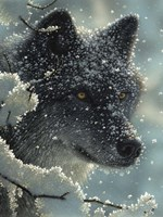 Black Wolf - Black in White Fine Art Print