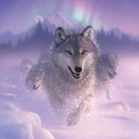 Running Wolves - Northern Lights - Square Fine Art Print