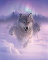 Running Wolves - Northern Lights Fine Art Print