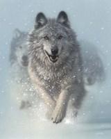 Running Wolves - Snow Plow Fine Art Print
