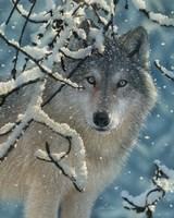 Wolf - Broken Silence Fine Art Print