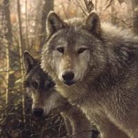 Wolves - Woodland Companions Fine Art Print