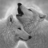 Wolves - Love Song - B&W Fine Art Print