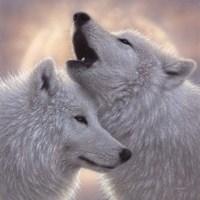 Wolves - Love Song Fine Art Print