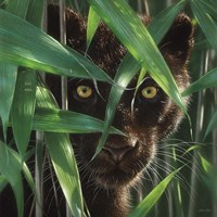 Black Panther - Wild Eyes Framed Print
