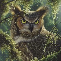 Great Horned Owl - Watching and Waiting Fine Art Print