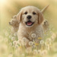 Golden Retriever Puppy - Dandelions - Square Fine Art Print