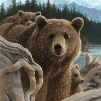Brown Bears - Backpacking - Square Fine Art Print