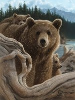 Brown Bears - Backpacking Fine Art Print