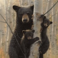 Black Bear Mother and Cubs - Mama Bear Fine Art Print