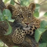 Leopard Cub - Tree Hugger Fine Art Print