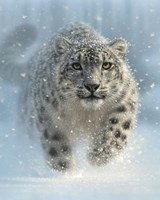 Snow Leopard - Snow Ghost - Vertical Fine Art Print
