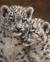 Snow Leopard Cubs - Playmates Framed Print