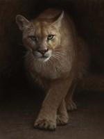 Cougar - Emergence Fine Art Print