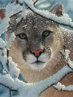 Cougar - Silent Encounter Fine Art Print