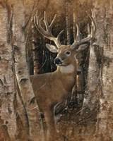 Whitetail Deer - Birchwood Buck Fine Art Print