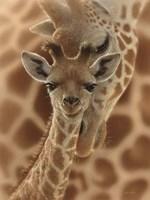 Newborn Giraffe Fine Art Print