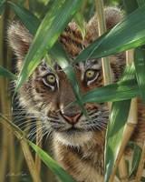 Tiger Cub - Peekaboo Fine Art Print