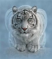 White Tiger - Wild Intentions Fine Art Print