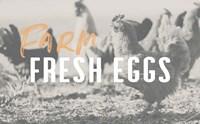 Farm Fresh Eggs Fine Art Print