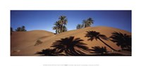 "20"" x 9"" Morocco Pictures"