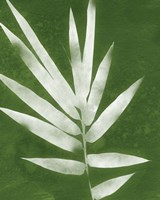 Green Spa Bamboo II Fine Art Print