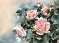 Pink Rose Luster Fine Art Print