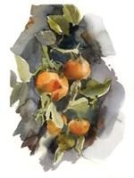 Peaches I Fine Art Print
