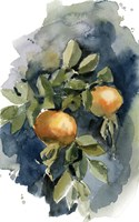 Peaches II Fine Art Print