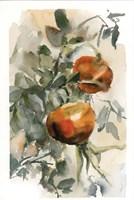 Peaches III Fine Art Print