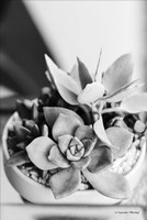 Succulents Fine Art Print