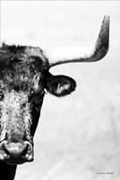 The Bull Fine Art Print