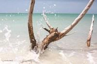 Beachwood I Fine Art Print