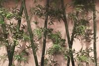 Bamboo on Blush Fine Art Print