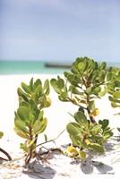 Sand Succulents I Fine Art Print