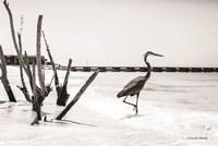 Shore Crane I Fine Art Print