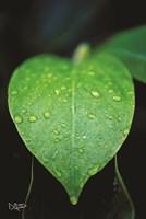 Green Leaf Fine Art Print