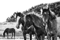 Horses Three Fine Art Print