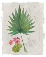 Botanical Journal II Light Fine Art Print