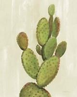 Front Yard Cactus I Framed Print