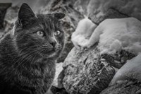 Cat and the Snow Fine Art Print