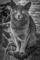 Cat Sitting on Rock Fine Art Print