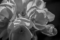 Monochrome Flower 05 Fine Art Print